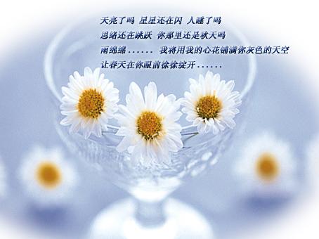 写给朋友 情谊如茶