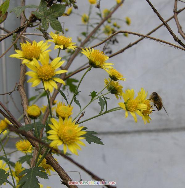 【原创】七绝:立冬感言 - 饮冰狂儒 - 静霆博客