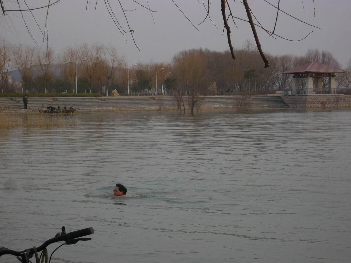 元旦平顶山新城区白龟湖游泳高清图片