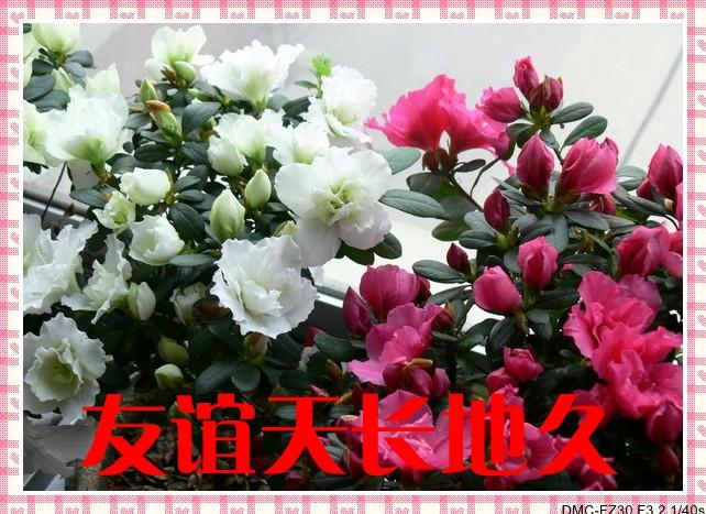 长春/[8]友谊天长地久_jpg_conew2.jpg