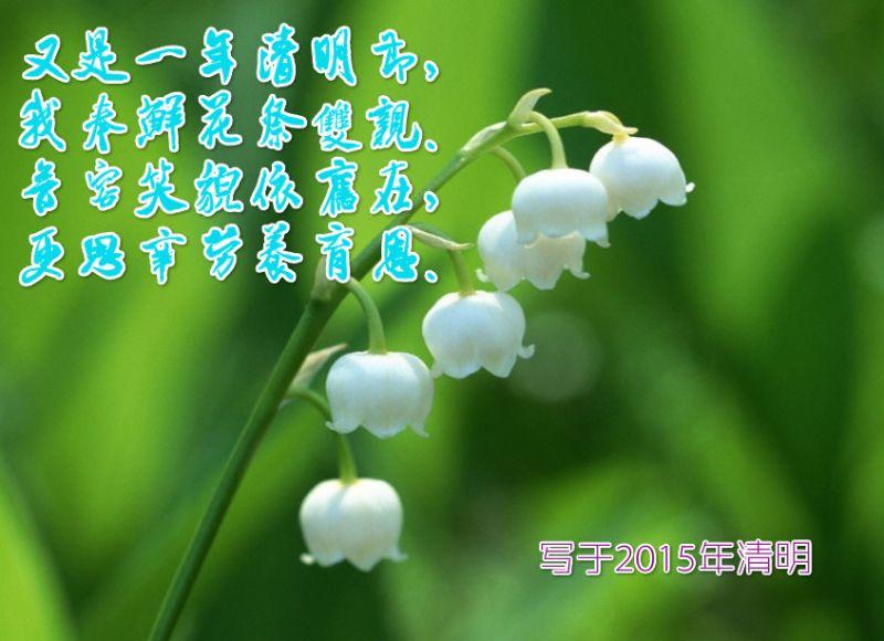 (话题)又是一年清明节 - 阿汪 - 阿汪的博客
