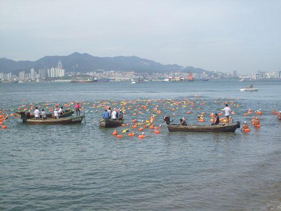 热烈祝贺《青岛冬泳协会专区》小眼聚光版主成功横渡刘公岛!